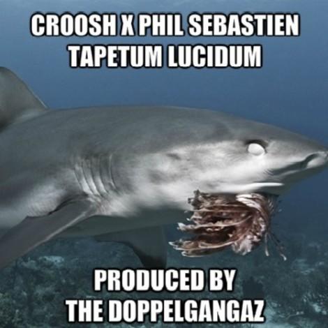 croosh tapetum lucidum